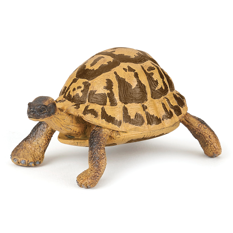 Hermanns Schildkröte