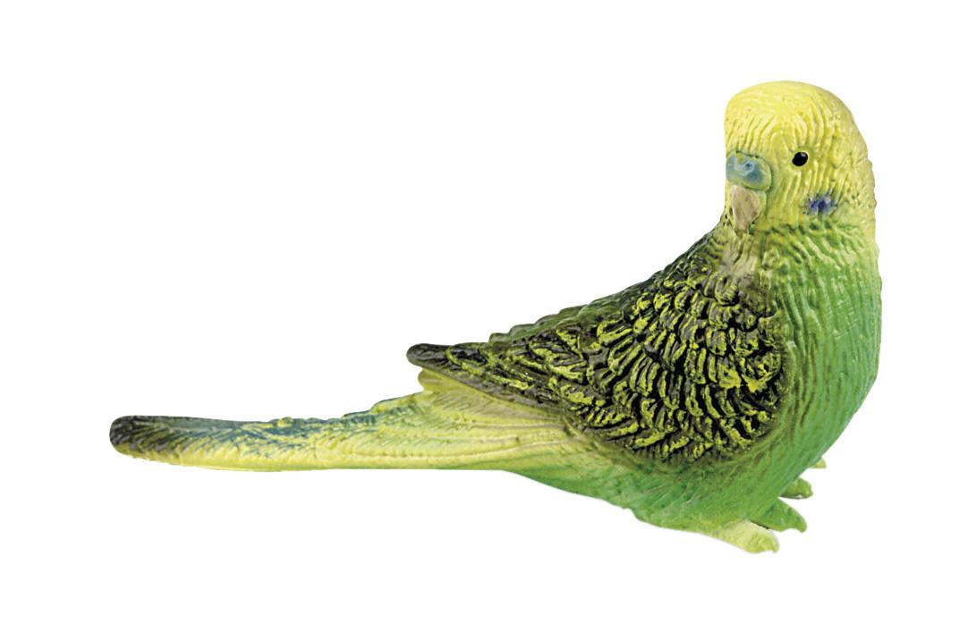 Wellensittich Grün © BULLY